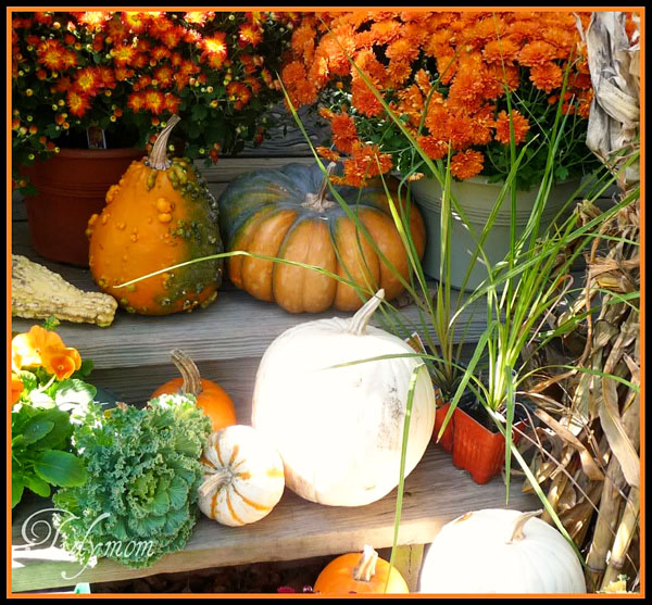 Fall goodies!  gourds, corn stalks and mums and more at TidyMom.net