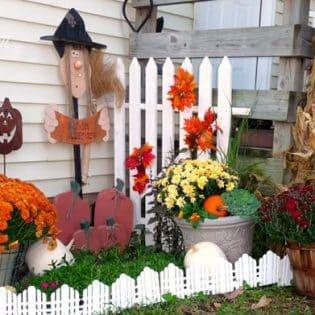 Fall yard and mums