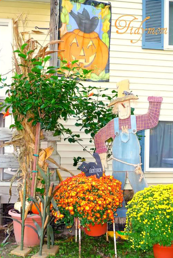 Fall mums and scarecrow