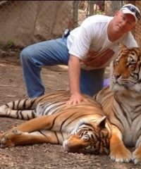 steve and tigers