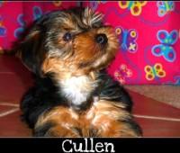Cullen3-09-1