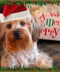 Cullen's First ChristmasChristmas