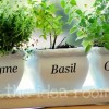 herb pots with Silhouette
