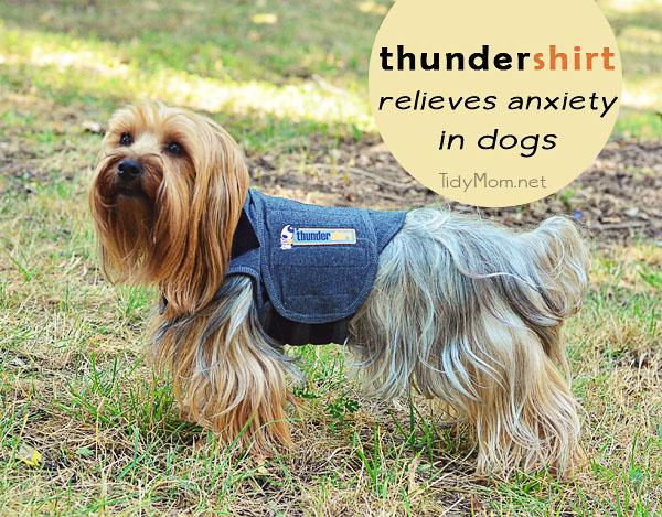 Thundershirt for dog anxiety at TidyMom.net