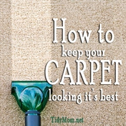 Tips On Carpet Cleaning Rug Doctor