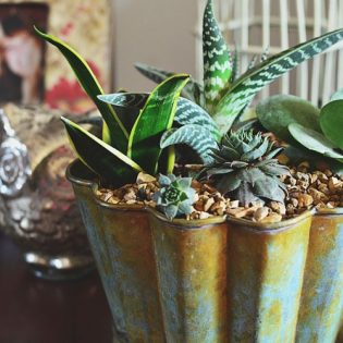 Decorating with Succulents at TidyMom.net