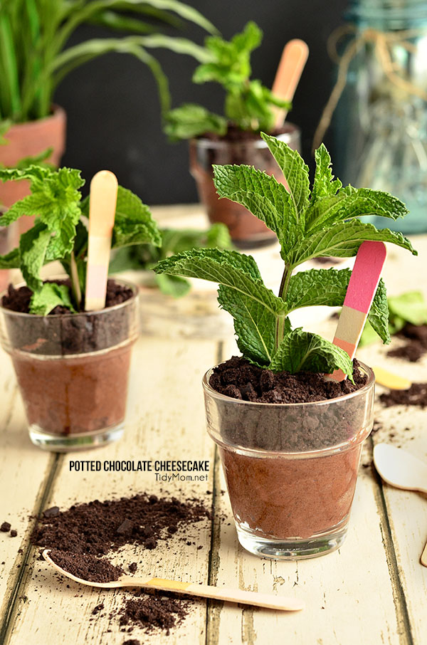 Potted Chocolate Cheesecake {no bake} perfect for Mothers Day, bridal shower or spring/summer soiree.  recipe at TidyMom.net