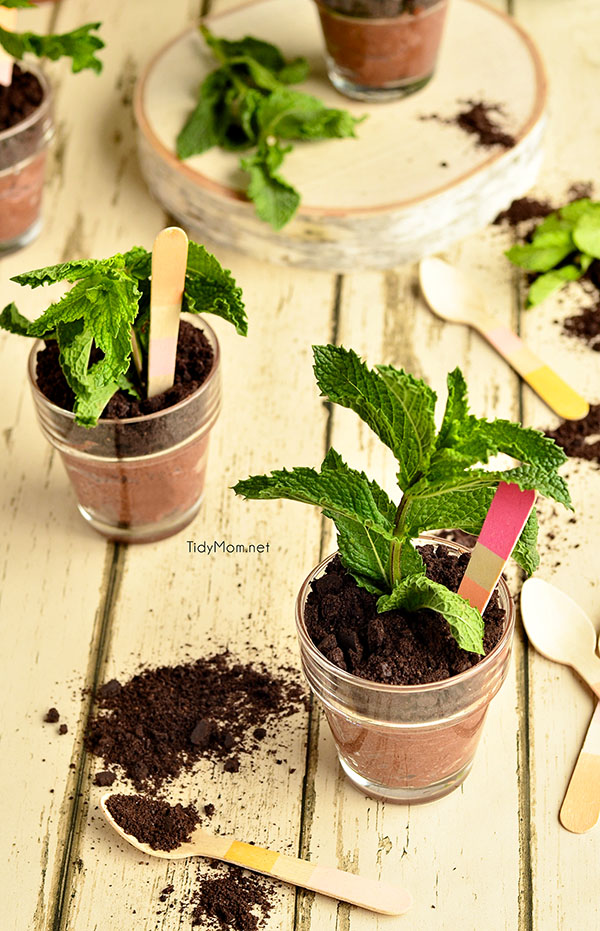 Potted Chocolate Cheesecakes {no bake} perfect for Mother's Day, bridal shower or spring/summer soiree.  recipe at TidyMom.net