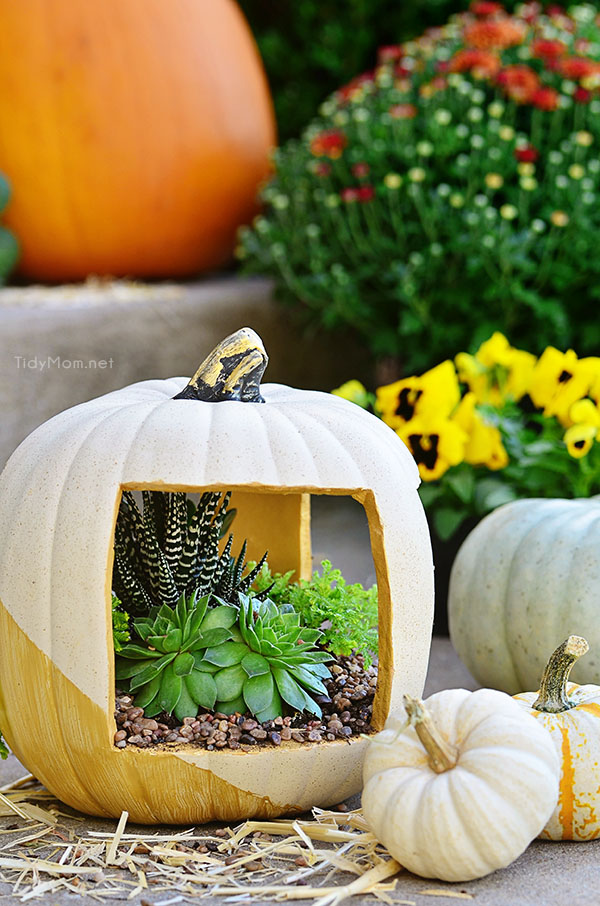 Gold Succulent Pumpkin planter filled with succulents at TidyMom.net