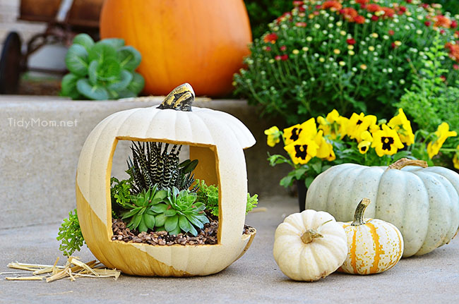 Gold Succulent Pumpkin planter at TidyMom.net