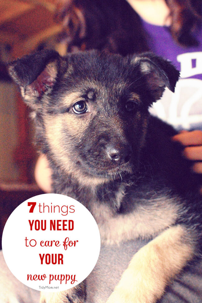 7 Things You Need to Care for Your New Puppy