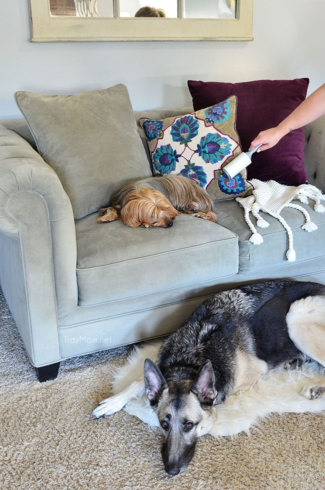 Use a lint roller to clean dog hair off your furniture. TidyMom.net