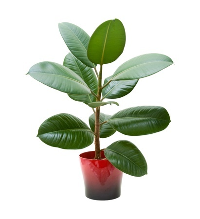 use baby wipes to clean plants