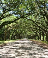 Wormsloe Historic site near Savannah, Georgia. A breathtaking 1.5 mile avenue sheltered by live oaks and Spanish moss. Savannah Sightseeing at TidyMom.net