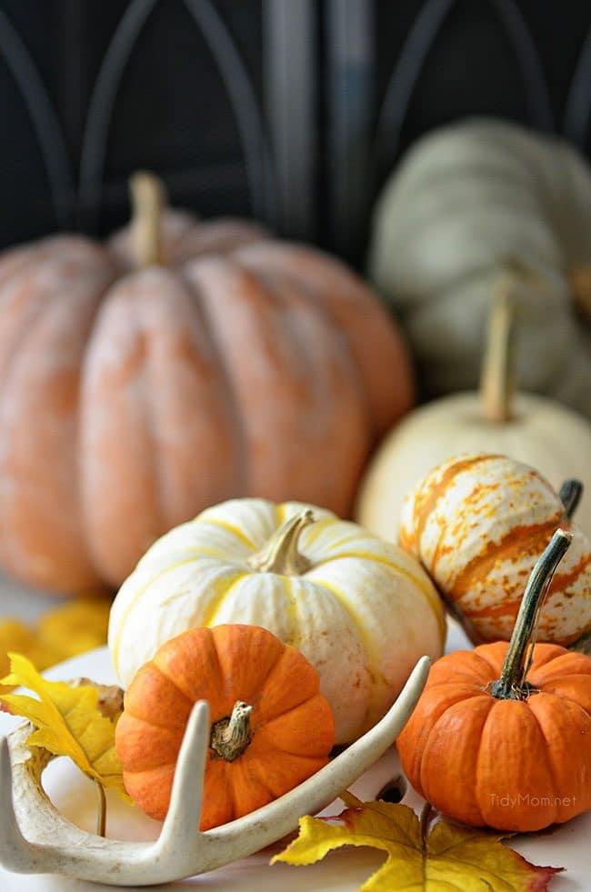 Fall pumpkins and gourds