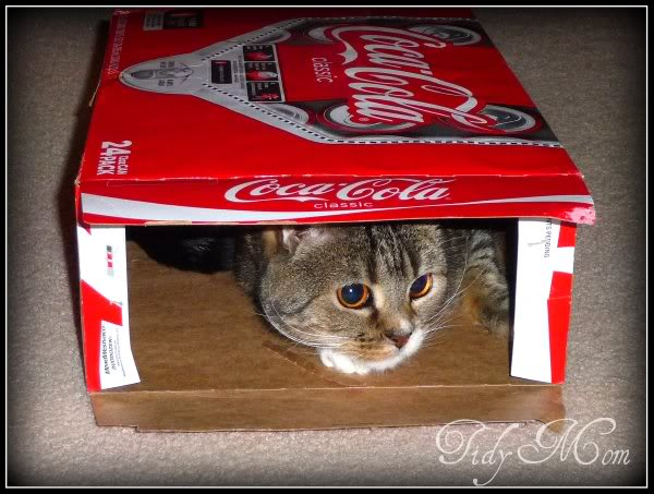 Kitty Kix hiding in a Coke box!