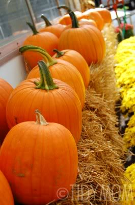 pumkins in row at TidyMom.net