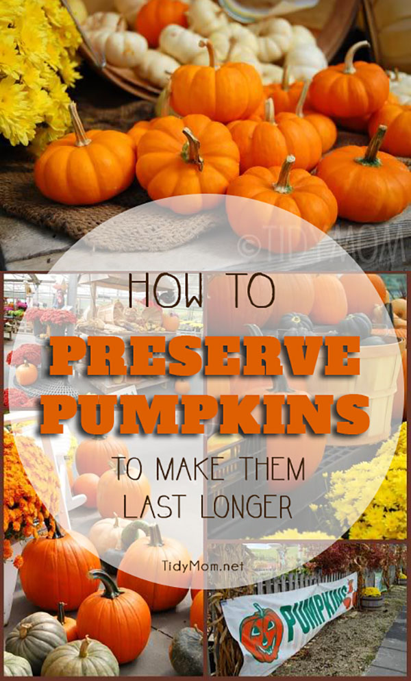 learn how to preserve pumpkins and keep your carved pumpkins looking their best all the way - How To Preserve Halloween Pumpkin