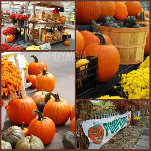 Pumpkin Pandemonium