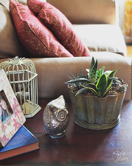 Decorating with Succulents TidyMom