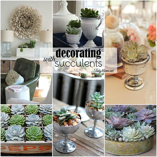 Decorating with Succulents indoors
