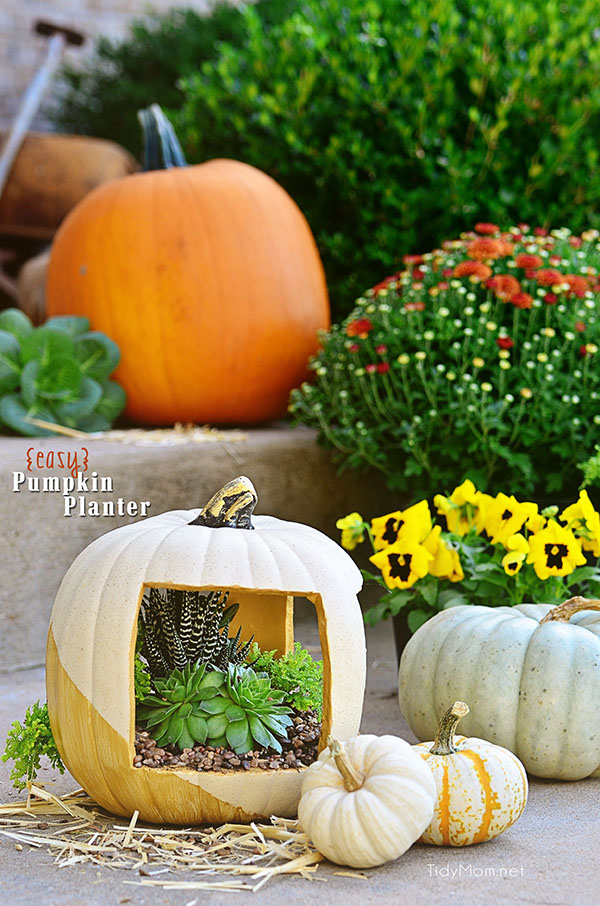 Easy Gold Succulent Pumpkin planter tutorial at TidyMom.net