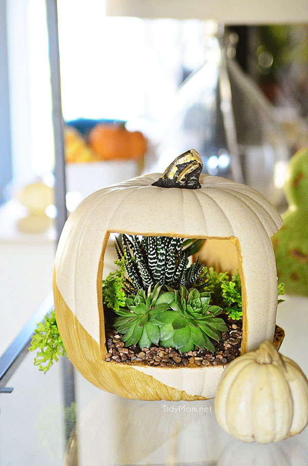 Easy & Elegant Succulent Pumpkin planter tutorial at TidyMom.net