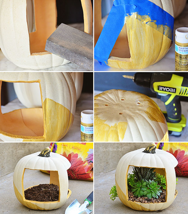 How to make a gold succulent pumpkin planter with succulents at TidyMom.net