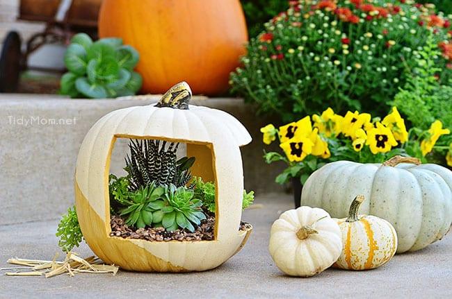 thanksgiving succulent centerpieces