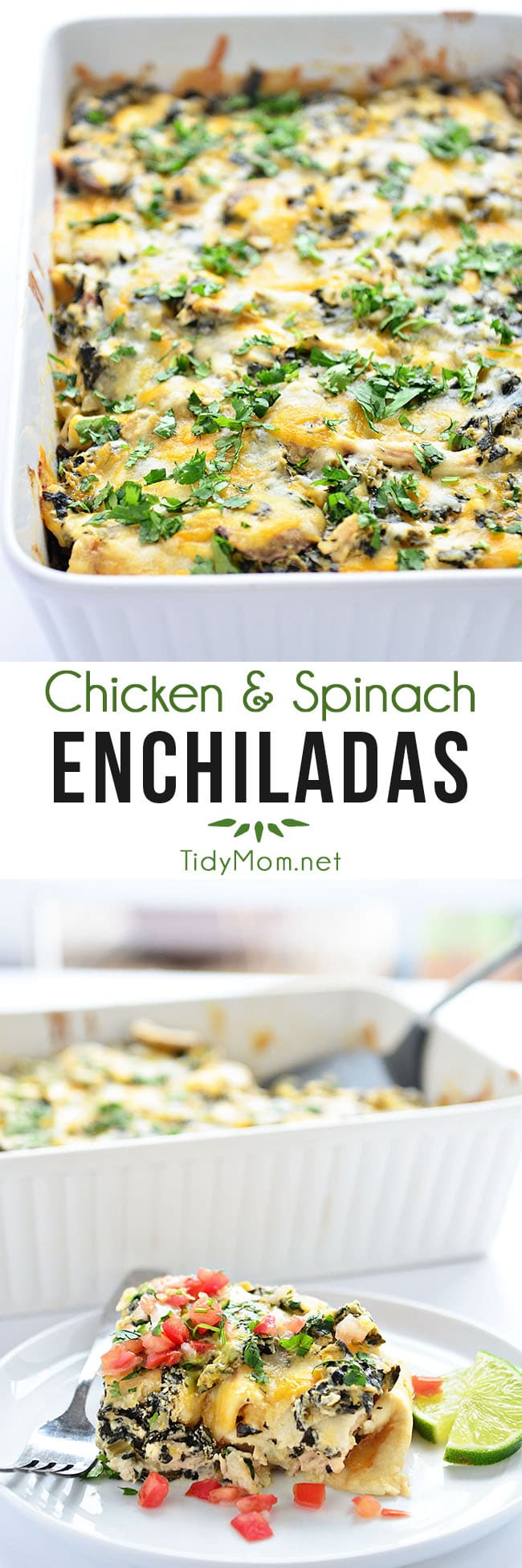 Chicken and Spinach Enchiladas are a family favorite! A simple casserole that comes together quickly and tastes rich and savory, bursting with flavor!  Printable recipe + how-to video at TidyMom.net #enchiladas #casserole #chicken #chickendinner #spinach
