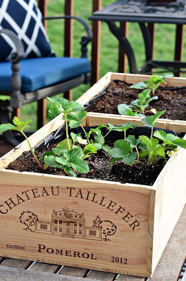 Wine Crate Garden Tidymom 174