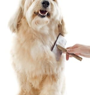 brushing dog