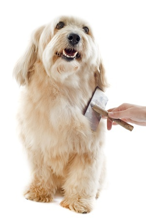 Brush your dog on a regular basis.  Both you and your four-legged friend can start enjoying the many benefits of dog grooming at home when you have the right tools and a few good dog grooming tips.