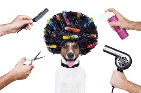 Keep your pooch fresh and fabulous without breaking the bank.  Both you and your four-legged friend can start enjoying the many benefits of dog grooming at home when you have the right tools and a few good dog grooming tips.