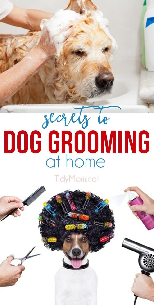 Keep your pooch fresh and fabulous without breaking the bank.  Both you and your four-legged friend can start enjoying the many benefits of dog grooming at home when you have the right tools and a few good dog grooming tips. After all, proper grooming is the key to a healthier, happier dog. For all the SECRETS TO DOG GROOMING AT HOME visit TidyMom.net #dogs #grooming #doggrooming #pets